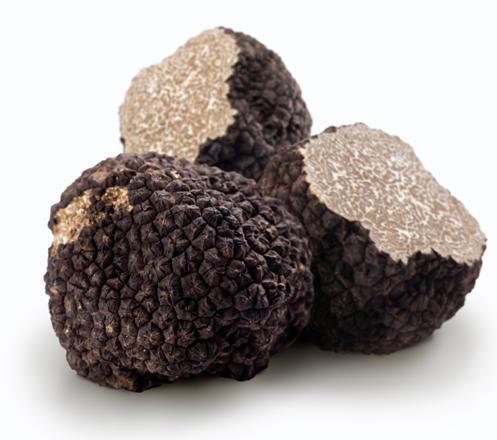 acheter truffe noire