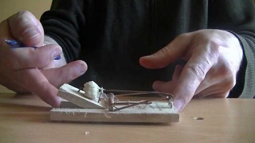 appat tapette a souris