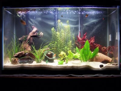 aquarium decoration pas cher