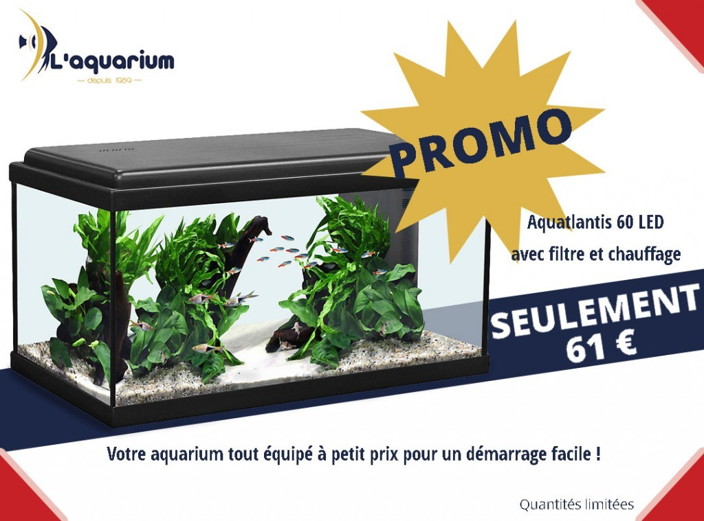 aquarium promotion