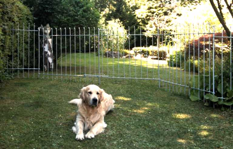 cloture jardin chien