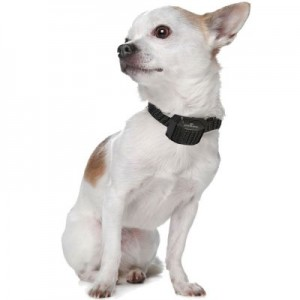 collier anti aboiement petit chien