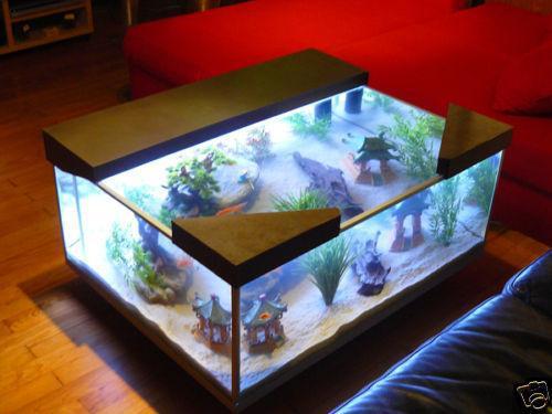 créer aquarium
