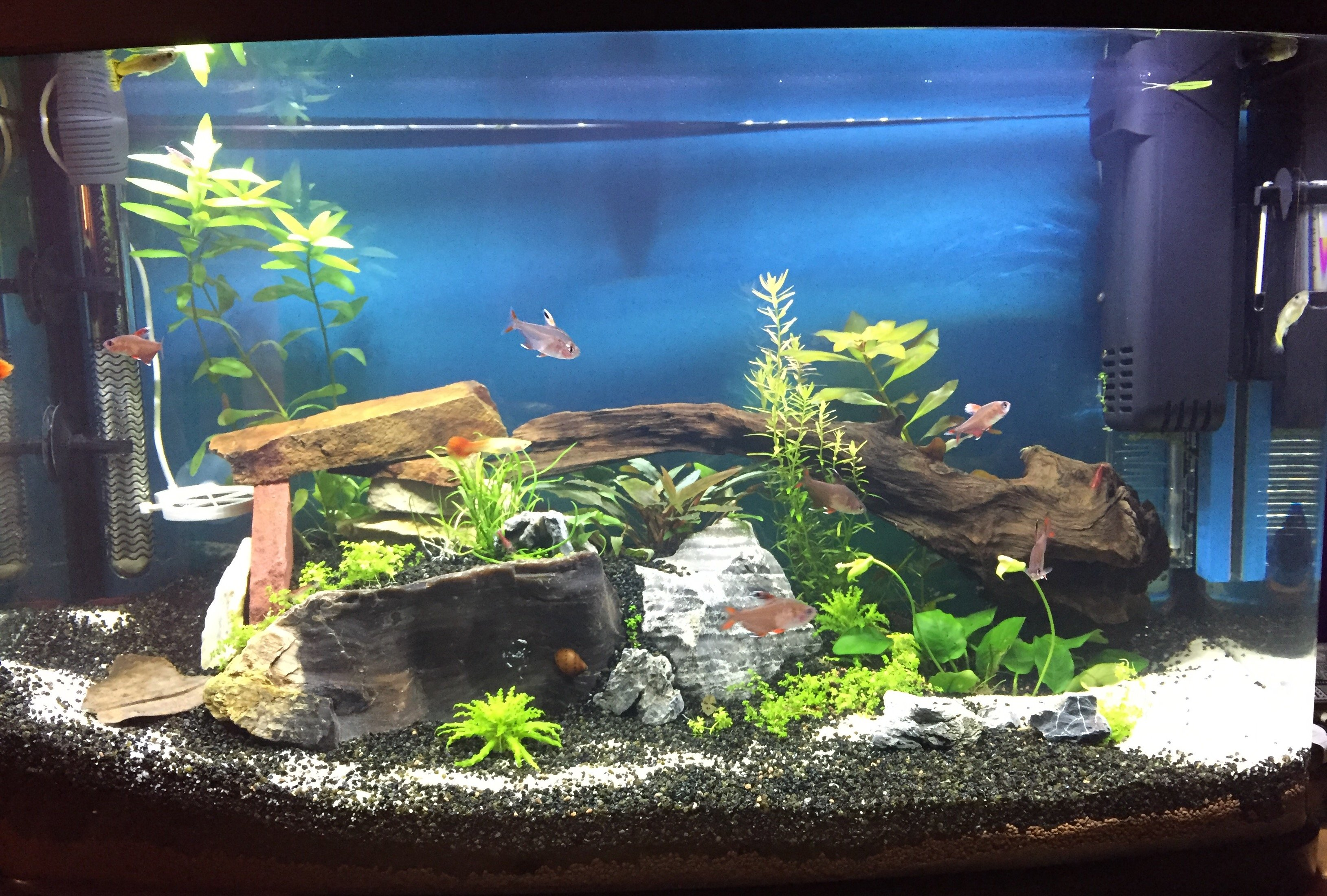 décor d'aquarium