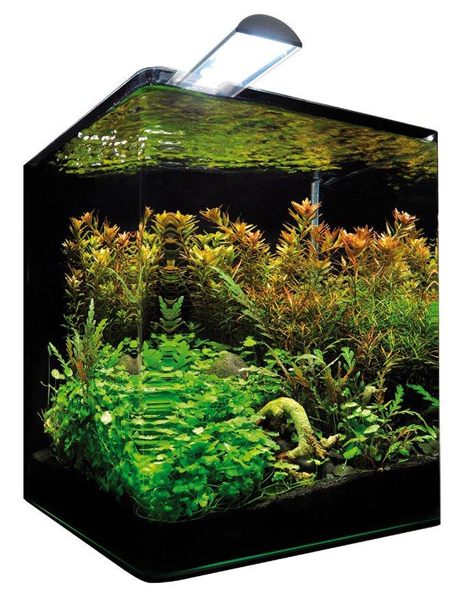 dennerle aquarium