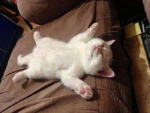 dormir du sommeil du juste