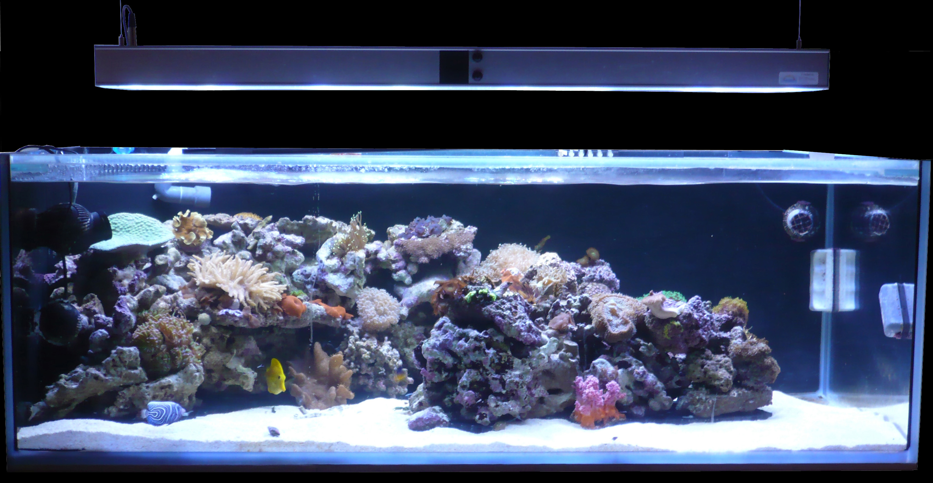 eclairage led aquarium