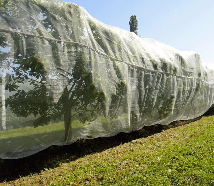 filet anti insectes pour arbre fruitier