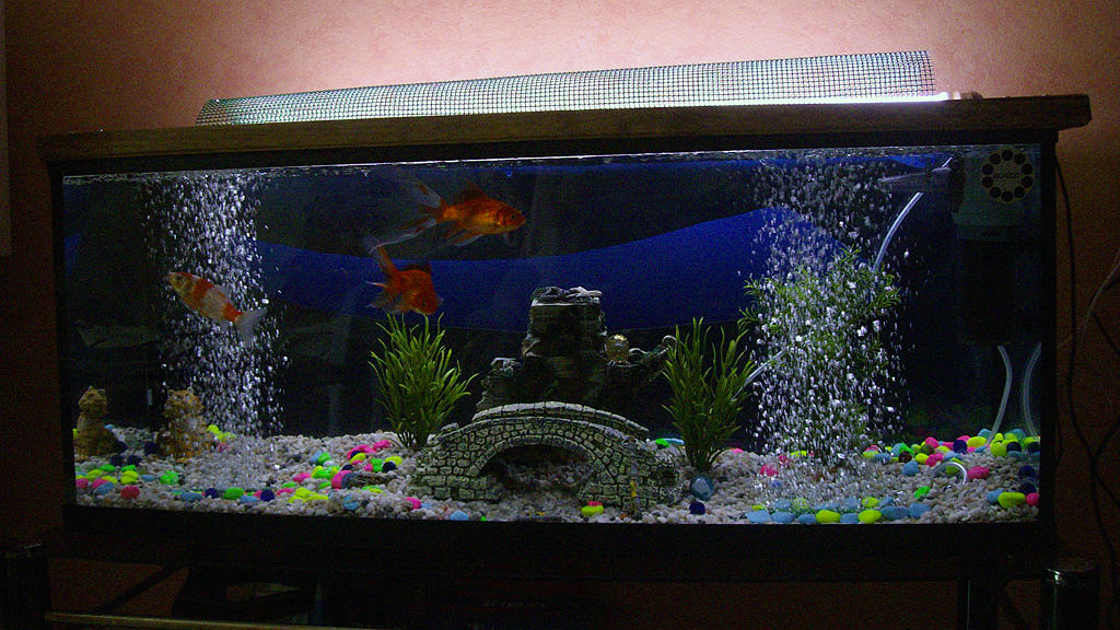 filtre aquarium poisson rouge