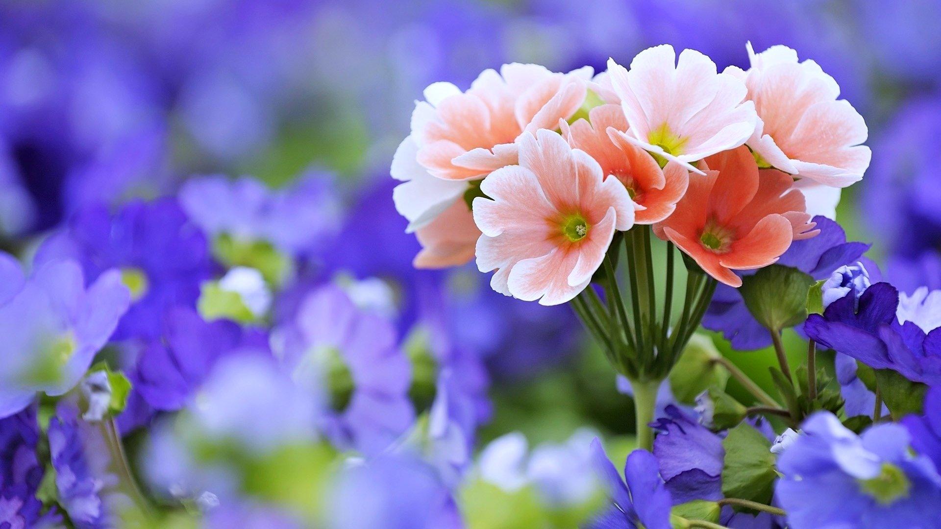 fond d écran hd fleurs