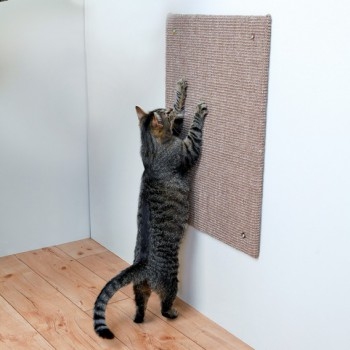 griffoir mural pour chat