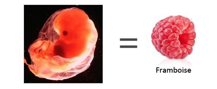 grossesse 8 semaines