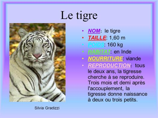 nom de tigre
