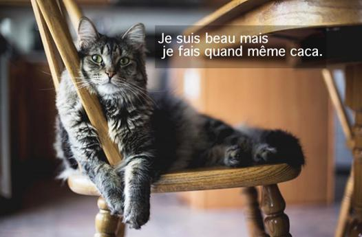 odeur chat appartement