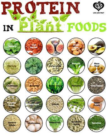 ou trouver des proteines dans les aliments