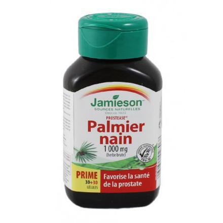 palmier nain saw palmetto