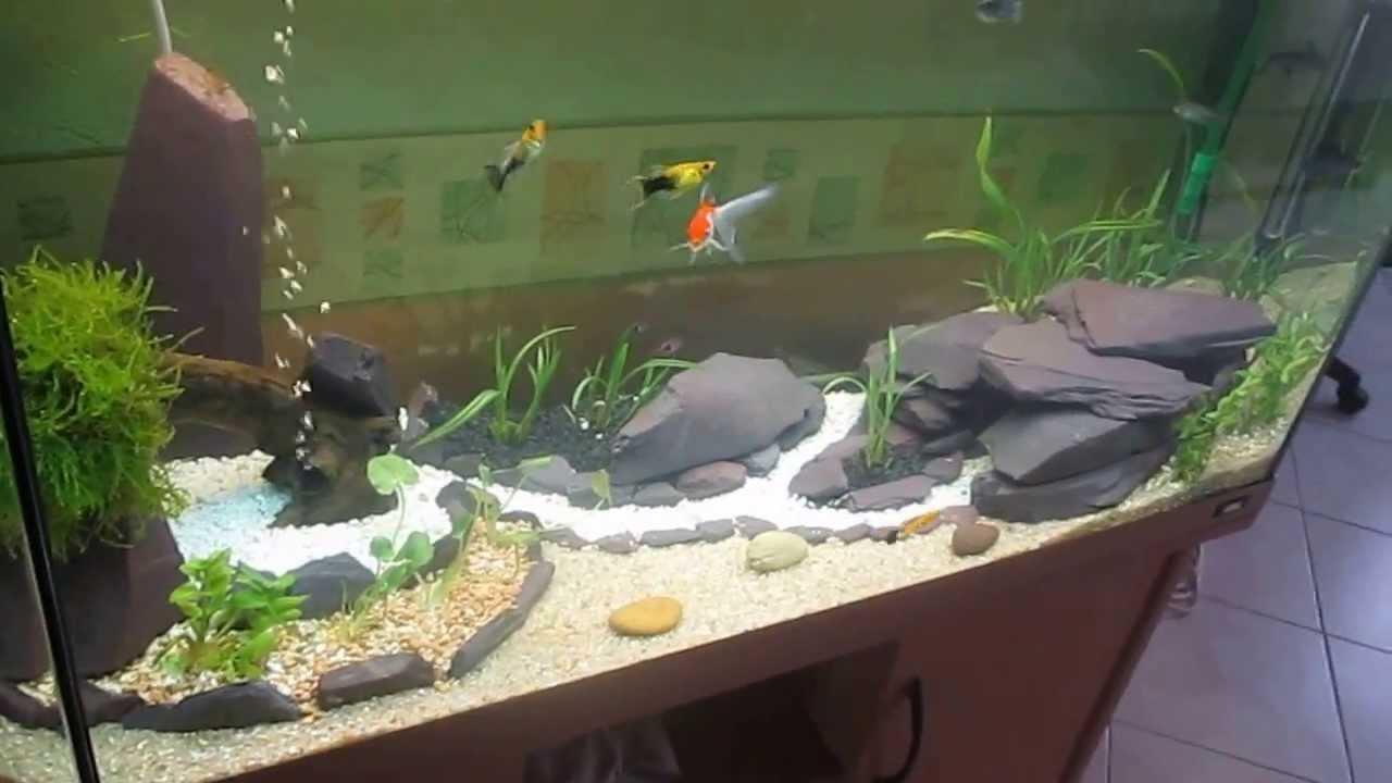paysage aquarium
