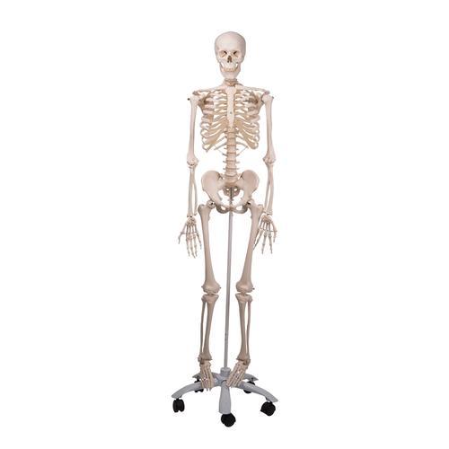 photos squelette