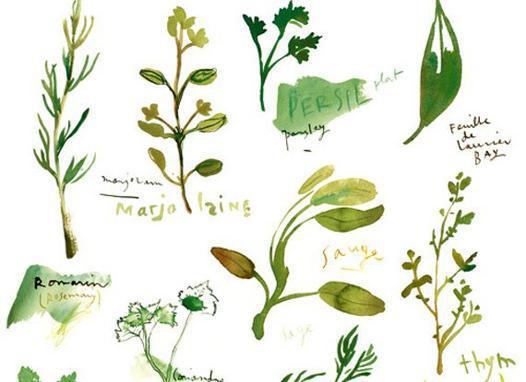 plante aromatique hiver