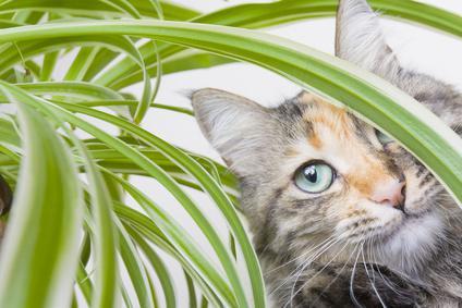 plante contre les chats