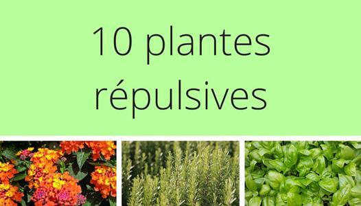 plante repulsif chat exterieur