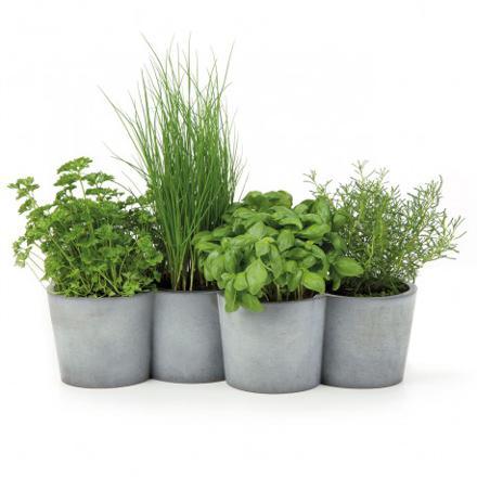 plantes aromatiques en pot