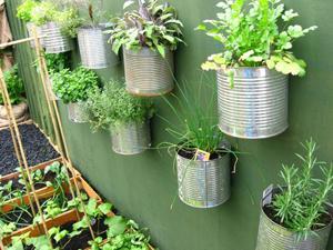 plantes aromatiques intérieur