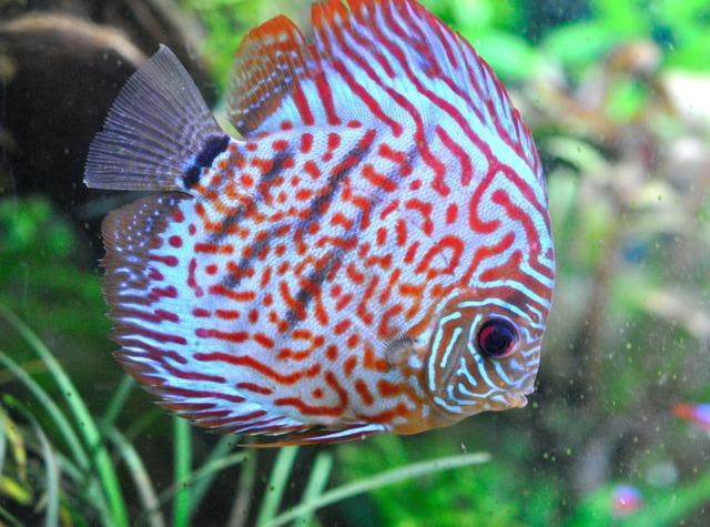 poisson aquarium eau chaude