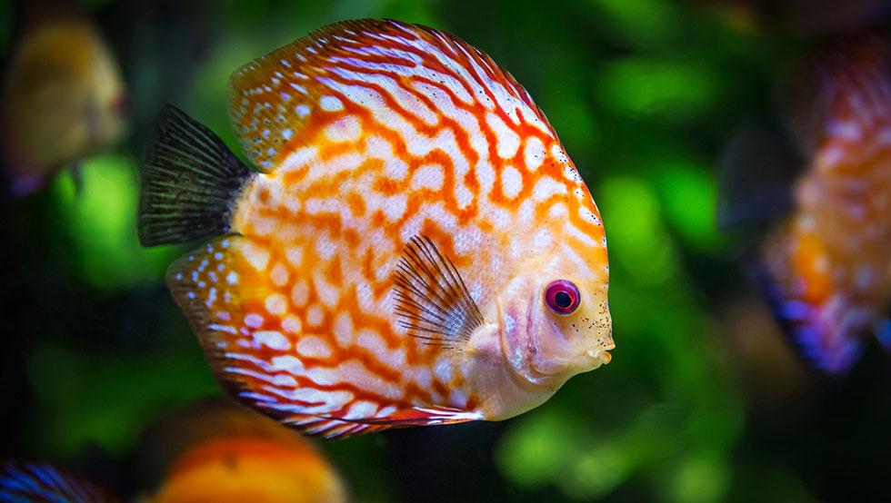 poisson dans petit aquarium