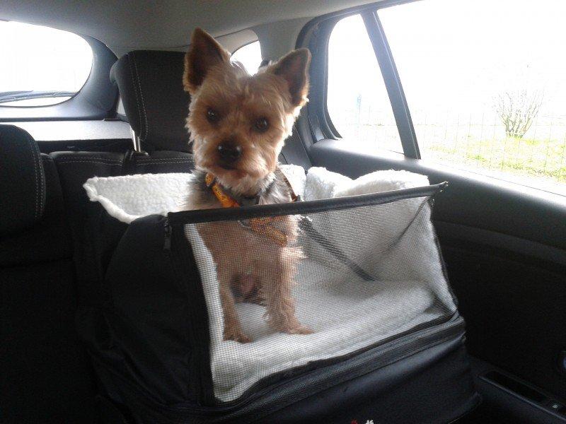 siege auto pour chien pas cher