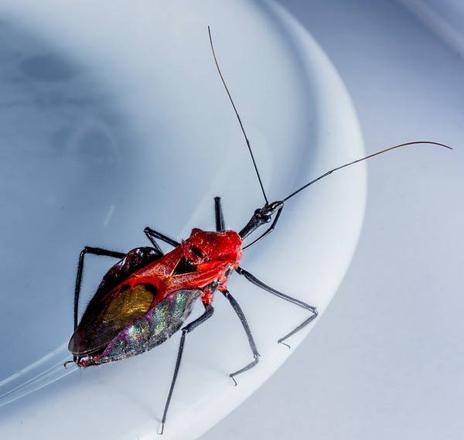 trouver un insecte