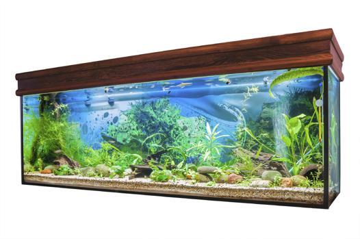un aquarium