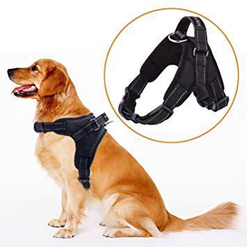 amazon harnais chien
