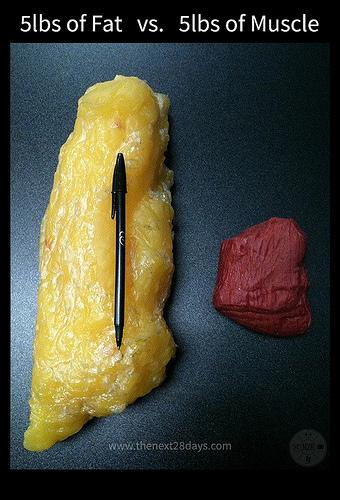 balance poids muscle graisse