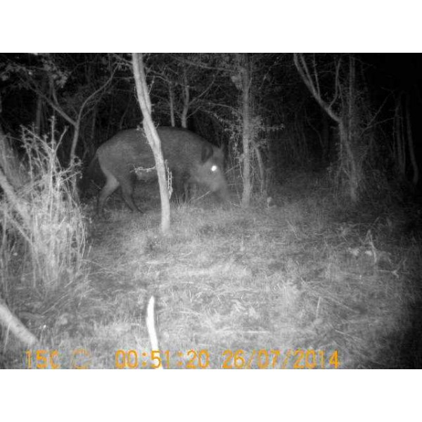 camera chasse nocturne