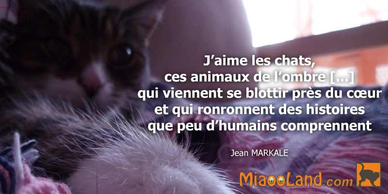 chat citation