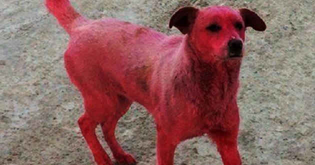chien rose