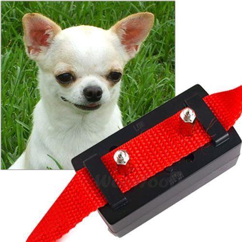 collier anti aboiement pour petit chien pas cher