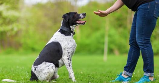dressage de chiens