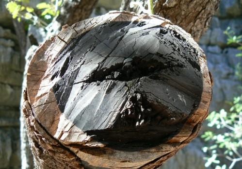 pourquoi le bois d'ébène est-il noir